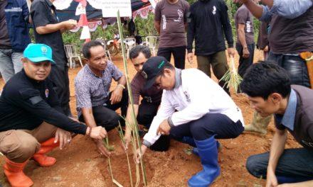 Kadis Kehutanan Prov Sulbar Buka Launching Penanaman Pengembangan Tanaman Unggullan Kayu Putih Tumpang Sari Sereh Wangi